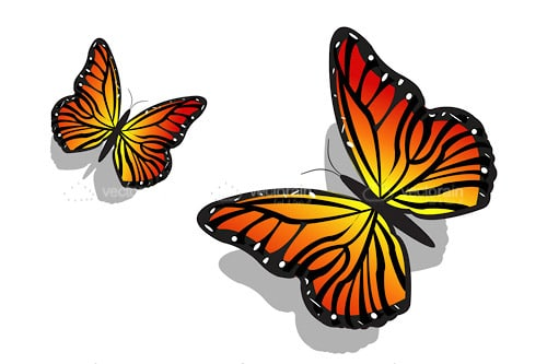 Pair of Beautiful and Colorful Butterflies