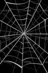 Spider Web Background in Black and White