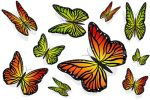 Lovely Colorful Butterflies
