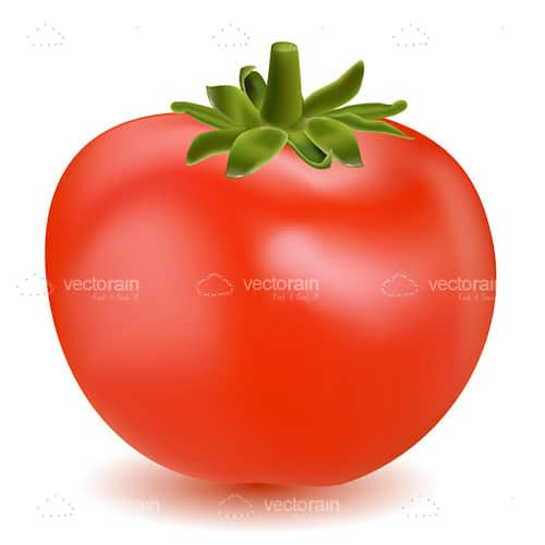 Illustrated Bright Red Tomato