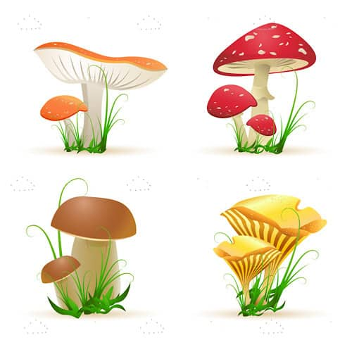 Set of Four Types of Mushrooms