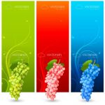 Colourful Vertical Banners with Matching Grape Bunches